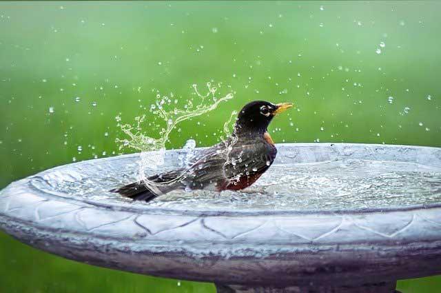 Vogeltränke mit Vogel drin